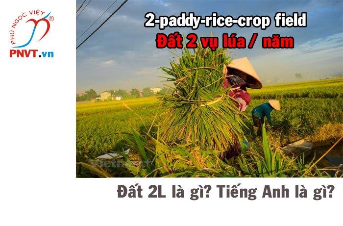 Đất 2L là đất gì? Đất 2 vụ lúa trên năm tiếng Anh là gì?